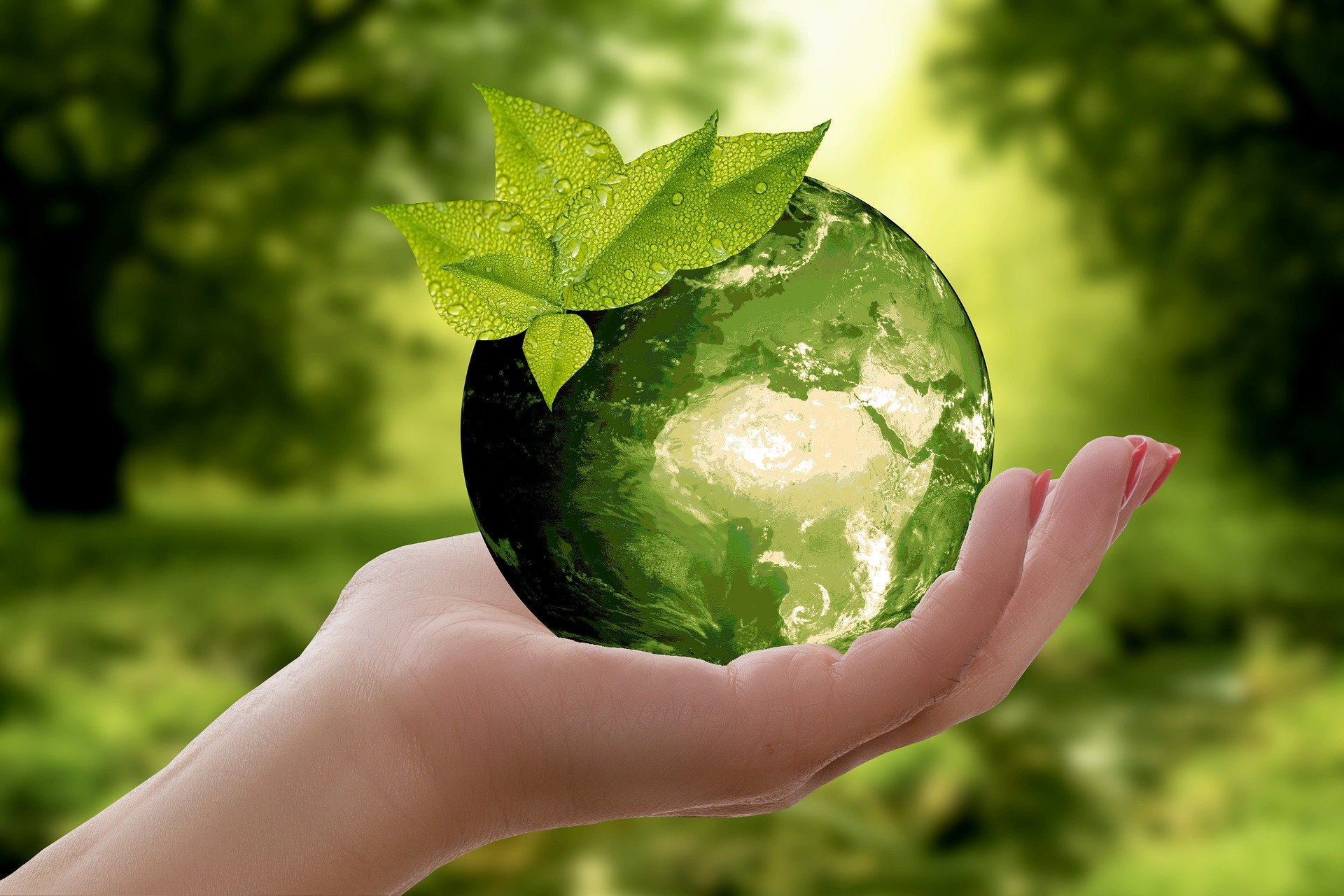 Article about Understanding Your Carbon Footprint